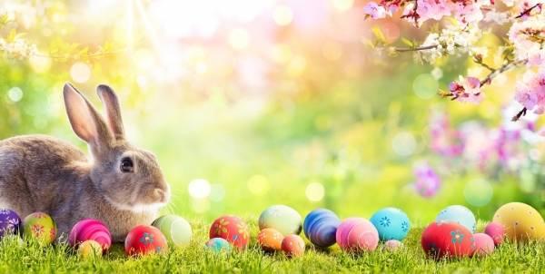 Fargebilde med kanin og påskeegg